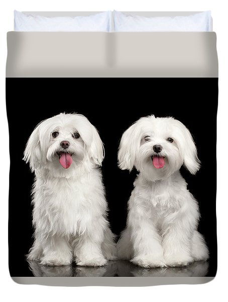Two Happy White Maltese Dogs Sitting, Looking In Camera Isolated Duvet Cover by Sergey Taran