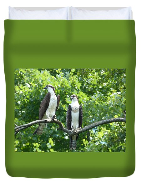 Two On A Limb - Osprey Duvet Cover by Donald C Morgan