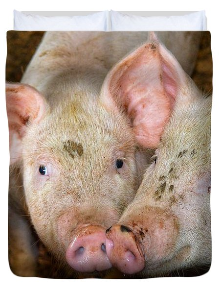 Two Pigs Duvet Cover