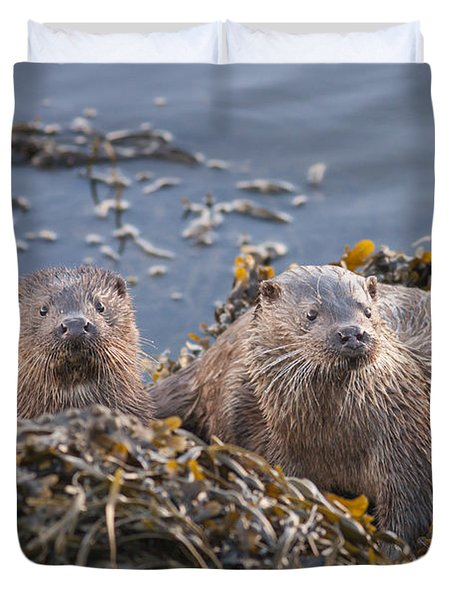 Two Young European Otters Duvet Cover