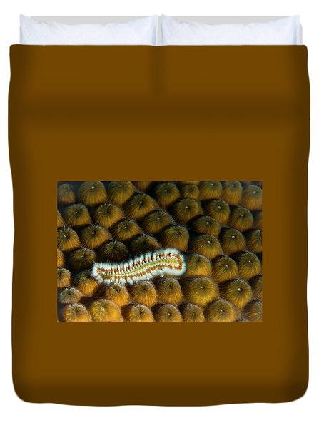 Duvet Cover featuring the photograph Undulating Bristle Worm by Jean Noren