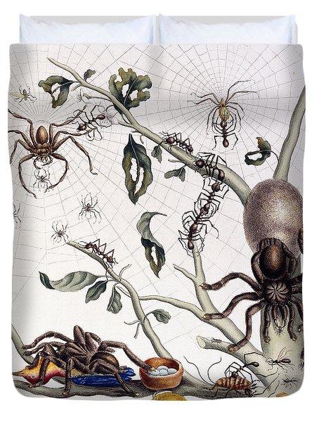 Various Arachnids From South America, 1726  Duvet Cover