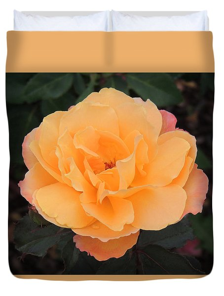 Velvety Orange Rose Duvet Cover