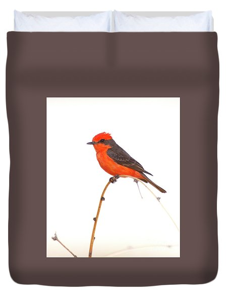 Vermillion On A Branch  Duvet Cover by Ruth Jolly