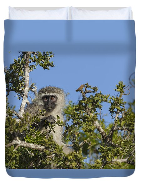 Vervet Monkey Perched In A Treetop Duvet Cover