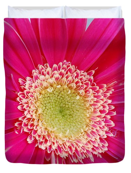 Vibrant Pink Gerber Daisy Duvet Cover by Amy Fose