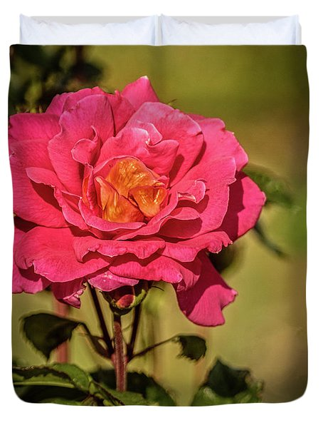 Vignetted  Rose Duvet Cover by Robert Bales