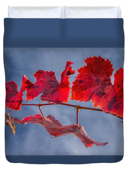 Vineyard - Late Fall Color 3 Duvet Cover