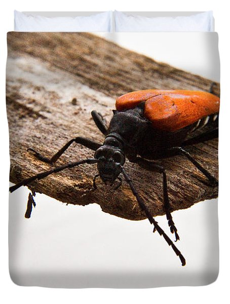 Walking Beetle Duvet Cover