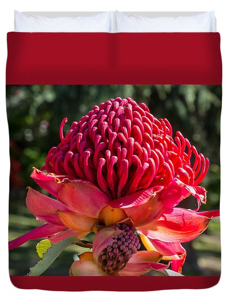 Waratah  Duvet Cover by Odille Esmonde-Morgan
