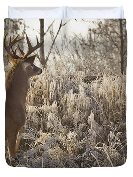 Wary Buck Duvet Cover