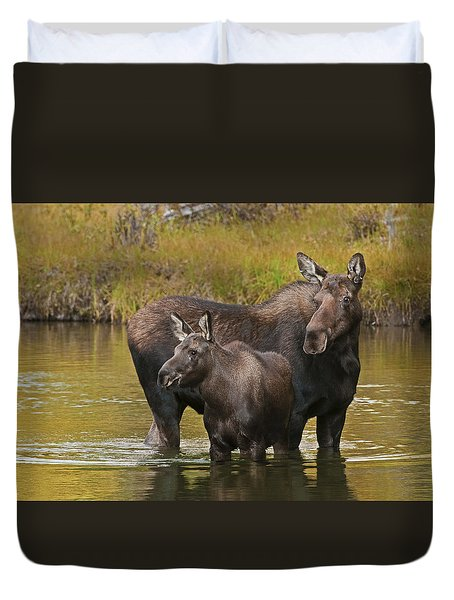 Watchful Moose Duvet Cover