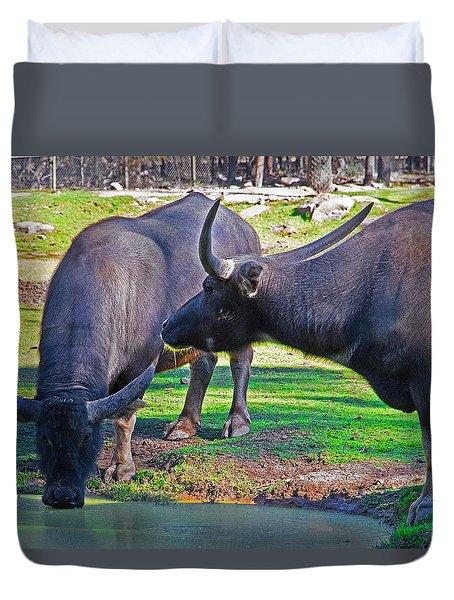 Watching 2 Water Buffalos 1 Water Buffalo Watching Me Duvet Cover