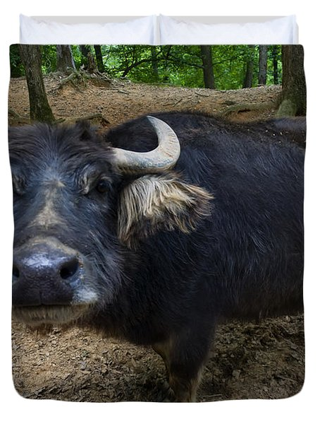 Water Buffalo On Dry Land Duvet Cover by Chris Flees
