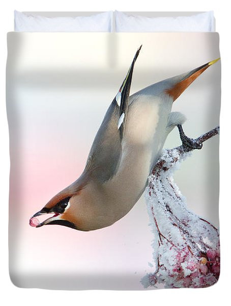 Waxwing Feeding  Duvet Cover