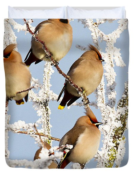 Waxwings And Hoar Frost Duvet Cover