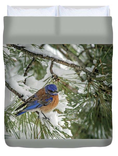 Western Bluebird In A Snowy Pine Duvet Cover