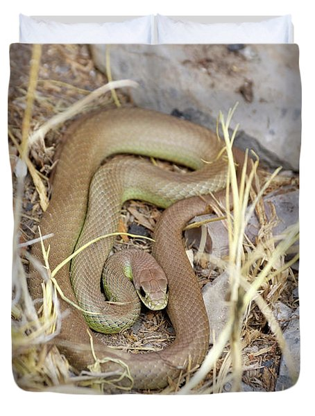 Western Yellow-bellied Racer, Coluber Constrictor Duvet Cover