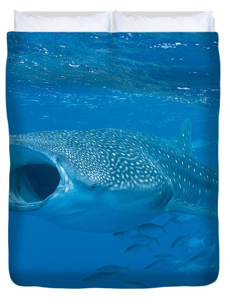 Duvet Cover featuring the photograph Whale Shark, Ari And Male Atoll by Mathieu Meur