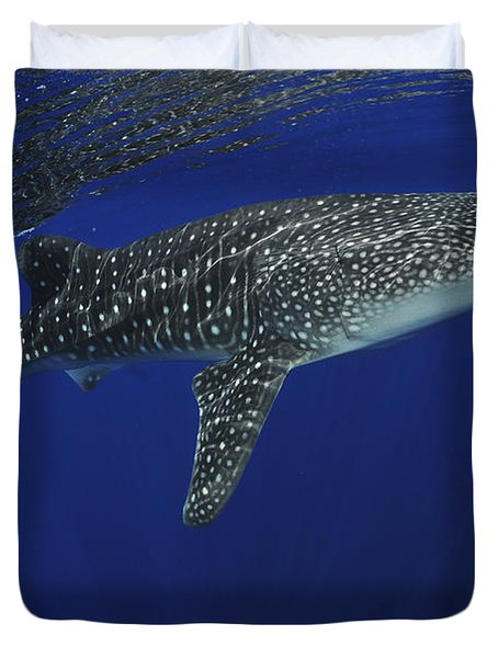 Whale Shark Near Surface With Sun Rays Duvet Cover by Mathieu Meur