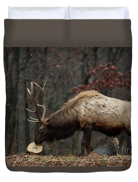 Duvet Cover featuring the photograph What's This? by Andrea Silies