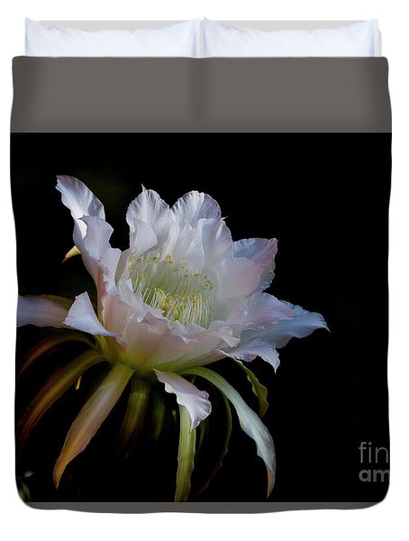 White Cactus Glory  Duvet Cover by Ruth Jolly