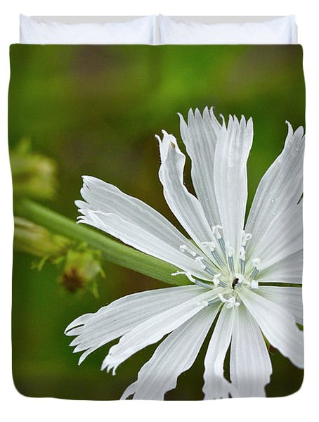 White Chicory  Rare Color Phase   Cichorium Intybus Duvet Cover