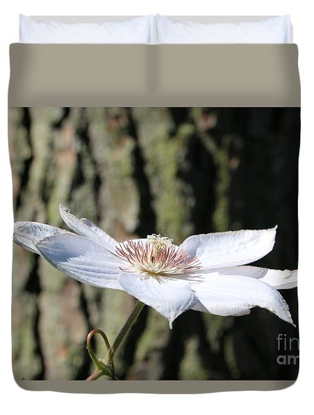 White Clematis Against Pine Duvet Cover by Marilyn Carlyle Greiner