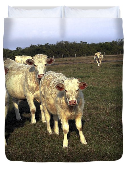 White Cows Duvet Cover by Sally Weigand
