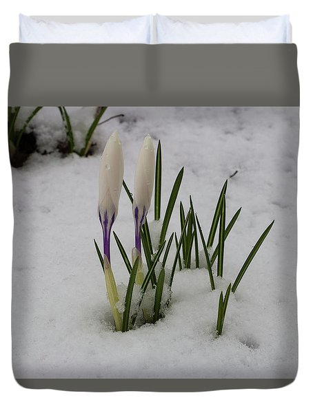 White Crocus In Snow Duvet Cover