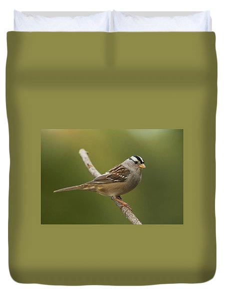 White-crowned Sparrow Duvet Cover by Doug Herr