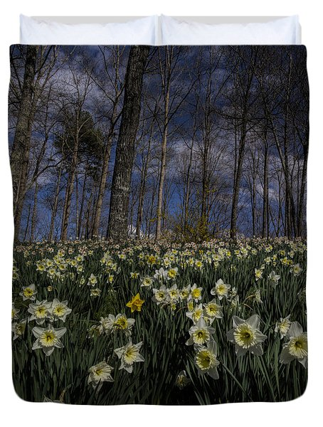 Duvet Cover featuring the photograph White Daffodils Pano by Barbara Bowen
