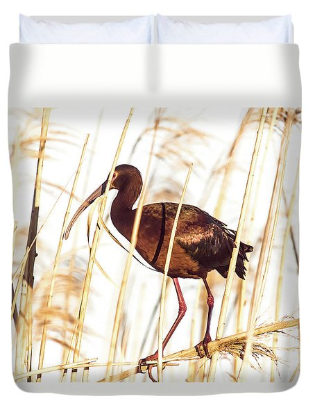 Duvet Cover featuring the photograph White Faced Ibis In Reeds by Robert Frederick