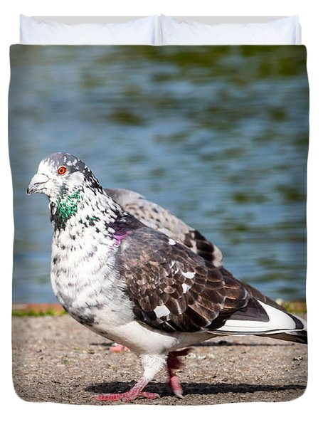 White-gray Pigeon Duvet Cover