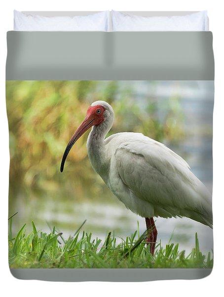 White Ibis On The Florida Shore  Duvet Cover by Saija Lehtonen