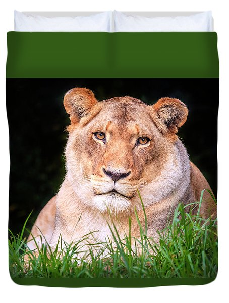 Duvet Cover featuring the photograph White Lion by Alexey Stiop
