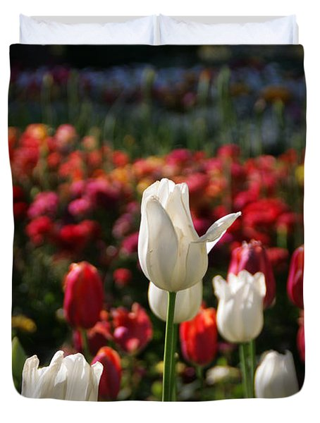 White Lit Tulips Duvet Cover by Andrea Jean