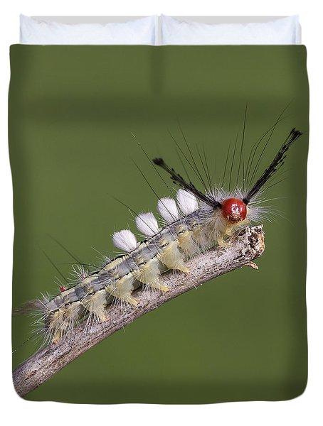 White-marked Tussock Moth Duvet Cover by David Lester
