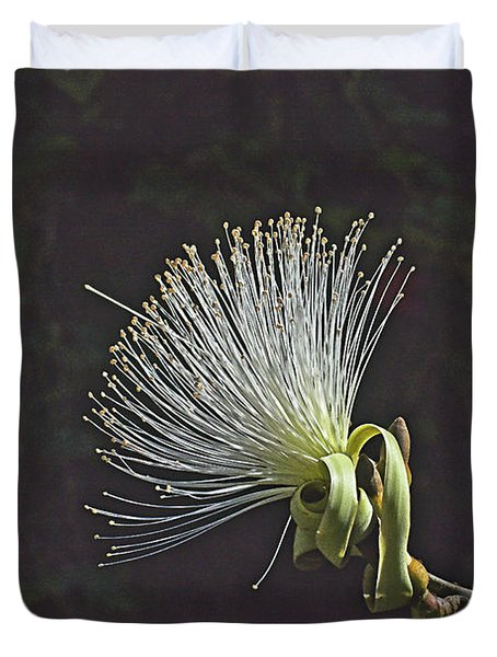 White Shaving Brush Pseudobombax Flower Duvet Cover