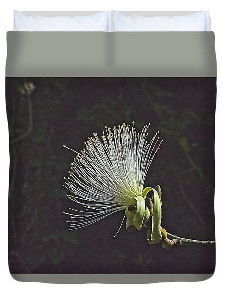 White Shaving Brush Pseudobombax Flower Duvet Cover