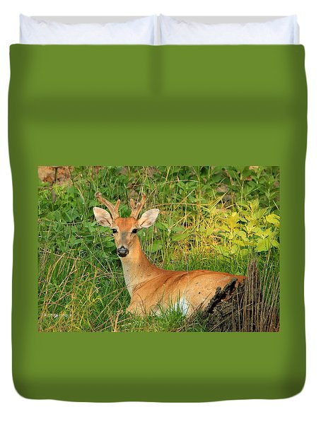 White-tail Buck Resting Duvet Cover