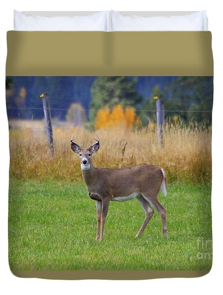 White Tail Dear  Duvet Cover