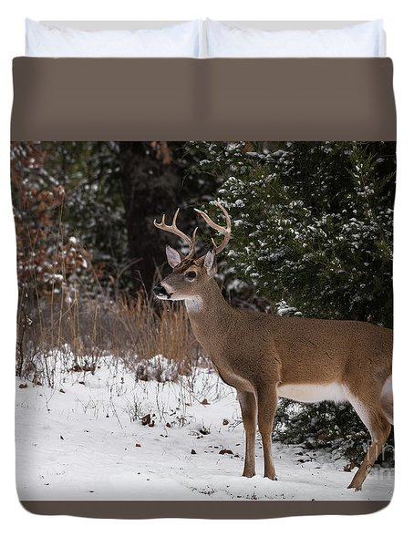 White-tailed Deer - 8904 Duvet Cover