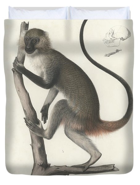 White Throated Guenon, Cercopithecus Albogularis Erythrarchus Duvet Cover