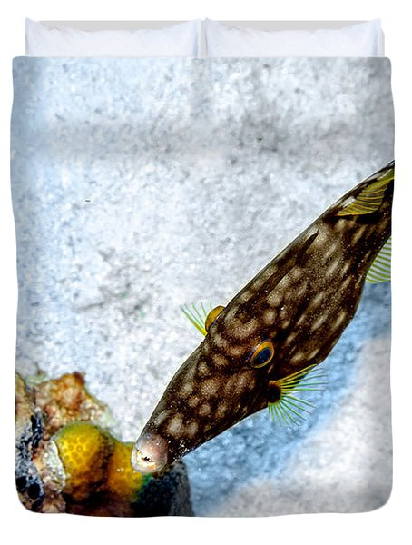 Whitespotted Filefish Duvet Cover