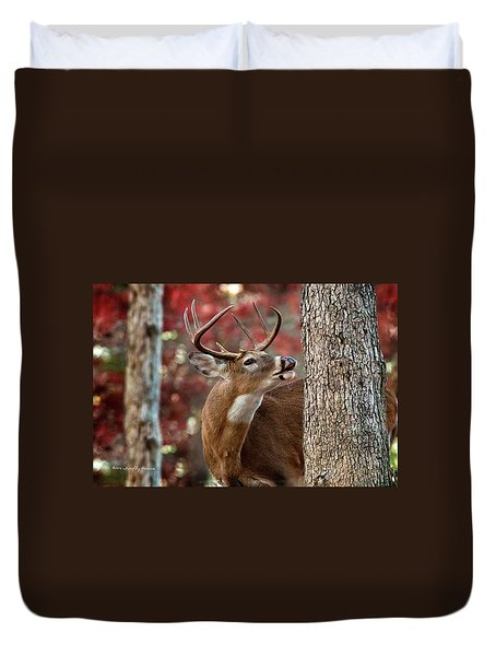 Whitetail #682 Duvet Cover
