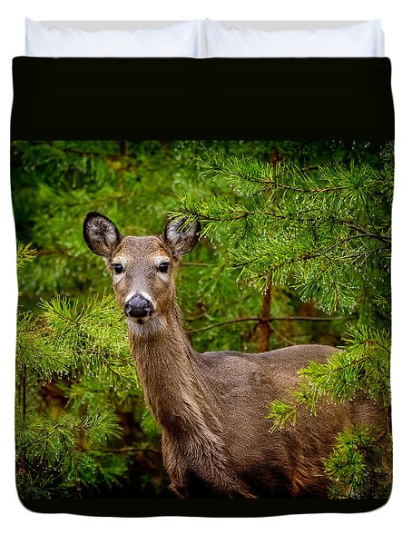 Whitetail In The Pines Duvet Cover