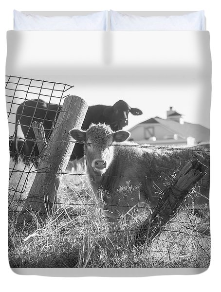 Duvet Cover featuring the photograph Who Are You, Angus Cows Seem To Ask by Toni Hopper