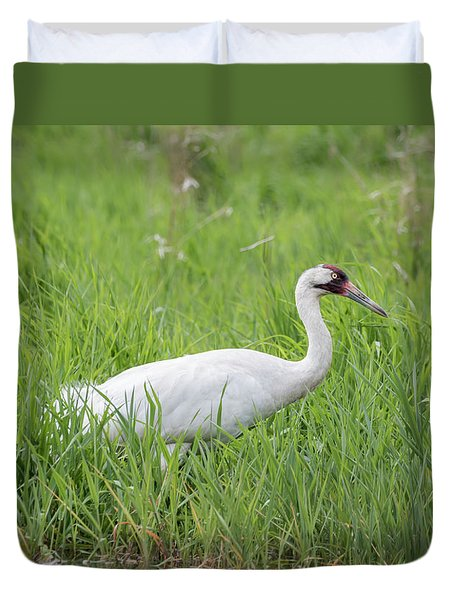 Whooping Crane 2017-2 Duvet Cover by Thomas Young