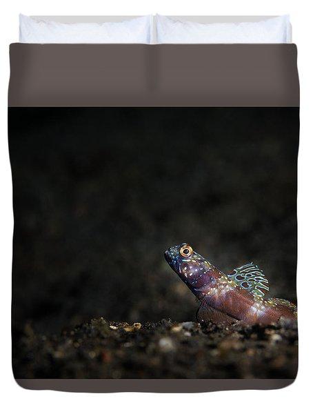 Wide-barred Shrimp Goby Duvet Cover
